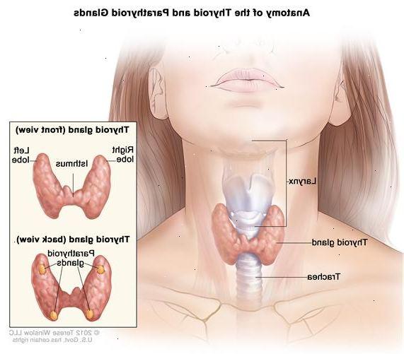cancer i halsen